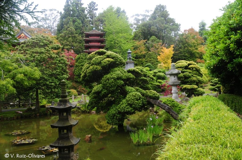 San francisco p gina de vicente ruiz olivares for Jardin japones hagiwara de san francisco